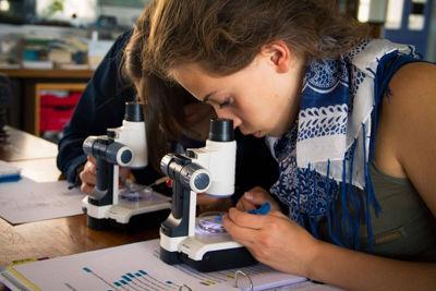 Организация и руководство учебно-исследовательскими проектами учащихся по предмету «Биология» в рамках реализации ФГОС