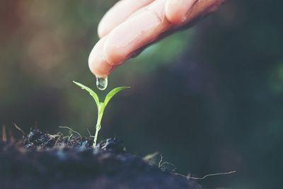 Общее садоводство: Травянистые растения для садов средней полосы